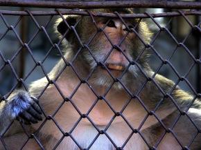 monkeyjailw